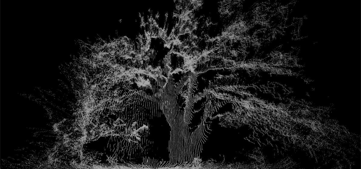 Old Oak in Elan Valley