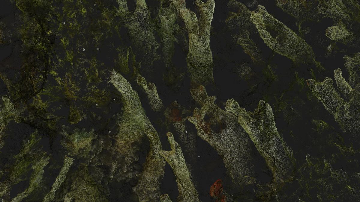 points of Cladonia lichen